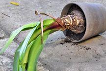 Soin des plantes intérieur
