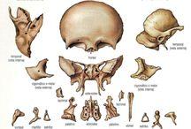 Ortopedia Manual