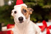 Sonya's happy New Year / Xmas tree, presents, happy new year, dog, jack russell
