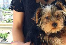 My Puppy ❤️