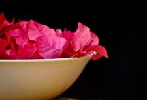 Fotografia- Pink