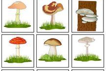 Mushroom - Sienet