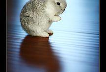 Lapin / Je suis folle des lapins !