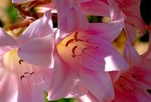 Flores&Plantas