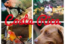 All things Costa Rica / Santa Teresa, Costa Rica