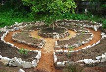 Monkey puzzle garden