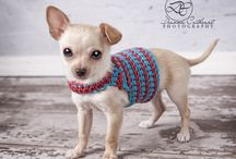 Chihuahua jumpers