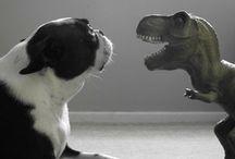 Funny T. Rex & cat