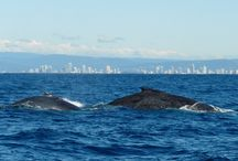 Gold Coast Scenery / Best Photos of The GC Courtesy of GC Tourism