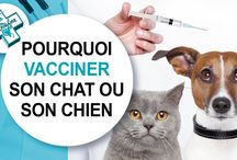 Vacciner son chat - chien