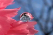 Raindrop reflections