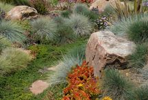 Natural Landscape / This board is about using native grasses, rocks etc. creating a natural landscape for your home.  Using little to almost no water!