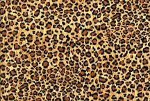 Cheetah Cheetah Cheetah / by Bree Campos💋