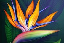 Çiçek6