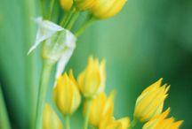 Bloemen blauw, geel, wit