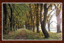 Obrazy z fotek / Občas blbnu s fotkami, co se mi zalíbí a udělám z fotky obrázek