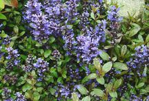 Midwest Ground Cover / Here are some beautiful examples of ground cover.