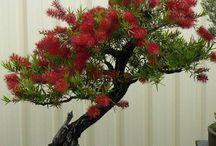 Bonsai . / Oh,so Beautiful!