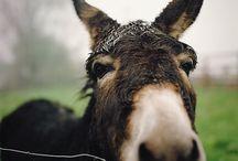 Gentle Donkeys / by Maria Wimmer