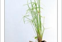 Kusamonos / Los kusamonos son pequeñas plantas herbáceas que pueden acompañan al bonsai y suelen cambiarse cada estación por una planta de temporada. Es una técnica ancestral muy delicada y para poder manejara estamos trabajando y estudiando duro, así que aunque por ahora os ofrezcamos modelos de artistas importantes en breve esperamos llenar el álbum con nuestras propias creaciones. leavesdesignleaves@gmail.com