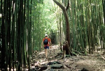 Maui Hiking Experiences / Guided hikes you can take during your next visit to Maui. / by Hike Maui