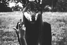 {we're animals}