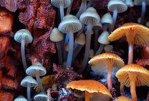 Mushroom Loveee