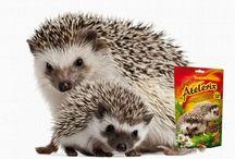 Żywienie innych ssaków