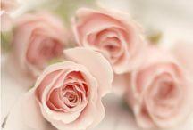 Pink Roses 2 / by eva fabian