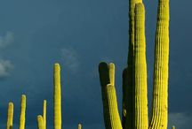 Saguaro National Park / Are you planning a trip to Saguaro National Park? Take Chimani with you! We develop 100% free mobile app travel guides for national parks and other outdoor destinations. No cell connection required! Download our apps for iOS and Android at http://www.chimani.com or in the App Store or on Google Play.