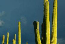 Tucson Arizona Photography