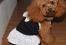 P&T Pet Apparel and Accessories