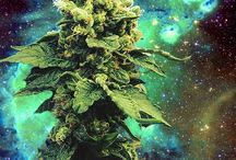 K U S H , W E E D ! ♥ / by Cannabis'<3