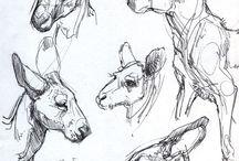 Animals//Canguro-Suricata