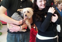 Happy Tails / Rescued dogs now with their FURREVER homes :) www.barksoflove.org / by BarksofLove Rescue