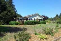 10454 Bodega Hwy,Sebastopol, CA  95472 For more information contact Frank Darien @ 707.799.7472 / An enchanting, wide open, flat sunny parcel encompassing 13+ total acres, with mature Oaks and Adam & Eve Redwoods surrounding the residence, plus 6+/- ac organic apples, 6 +/- ac organic pasture, CCOF certified since 2005, 400sf wrap around house deck, 600sf double carport, 900sf studio attached to carport, 750sf apple shed, well & pump house, $29K NRCS Ag Well Construction grant and approved Williamson Act Level I exemption, to be filed. 4bed/2bath 1,850sqft www.wrealestate.net