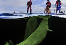 Sea Life / by Samantha Beals