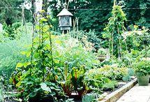 organic gardening  / Organic gardening