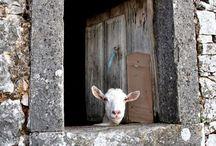 sheep barn plan