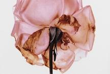 Flora Bloom / by Eduarda Botelho