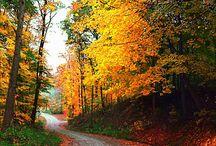 Autumn / autumn / by Renee Martin