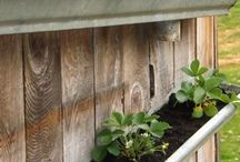 Old guttering used for growing stuff attached to wall