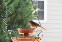 BIRD FUN / by Cleo Reich