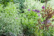 Garden Plommontradet
