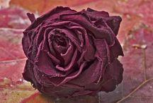 - Flowers / Fleurs - / Le plus beaux tableaux de fleurs des artistes ARTactif !
