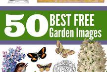 Garden Clipart
