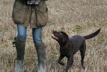Dog Training / by Christy Handzo