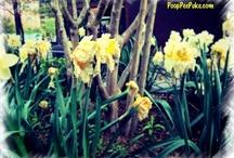 Flowers / by Vickie Burkett