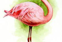 Dyr: flamingo