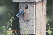 Hanbury bird garden